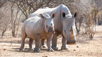 Khama Rhino Sanctuary: an incredible African wildlife safari adventure