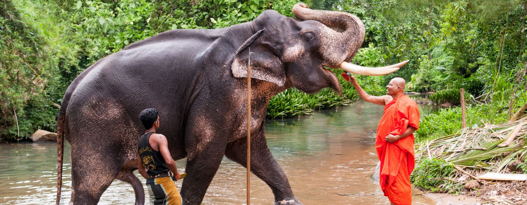 Elephant nature park: volunteer abroad - work at an elephant sanctuary