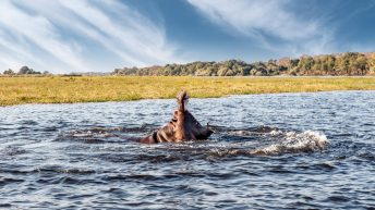 Chobe National Park Safari: face to face with the wild animals of Botswana